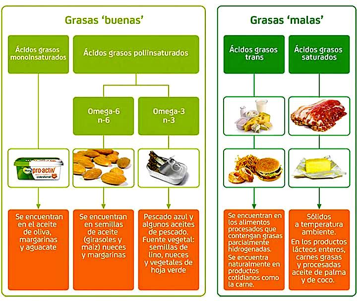 Alimentos para Aumentar el Trasero-Grasas Buenas y Grasas Malas